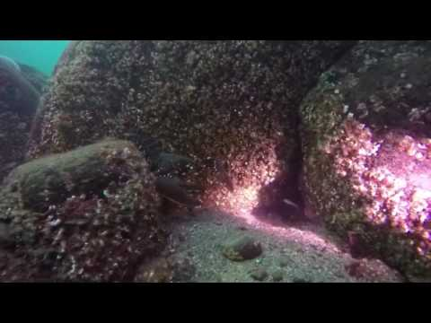 Diving Dunbar Harbour 11 sept 2016