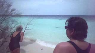 Hai schwimmt am Strand entlang Malediven