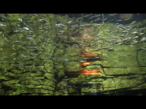 Cabela's Indoor Aquarium