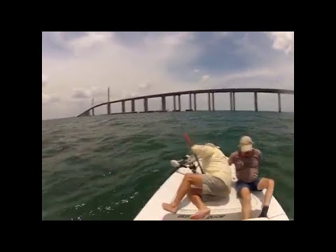 Tampa Bay Tarpon - Reel Florida Adventures (727) 251-2623