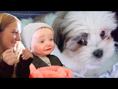 We're Getting a Puppy?! | Teen Mom Vlog
