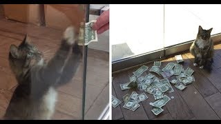 Is it legal if cats Stealing Money from Strangers in order to give them to Homeless