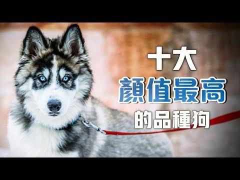 【寵物排行榜】十大最美麗的品種狗,你的孩子有在裡面嗎?🤔