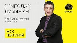Вячеслав Дубынин – о том, как устроен наш мозг - Мослекторий