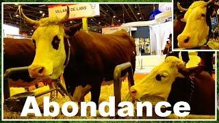 Vache Abondance - Bos taurus - Linnaeus, 1758 - Salon de l'Agriculture 2016 - 04/03/2016
