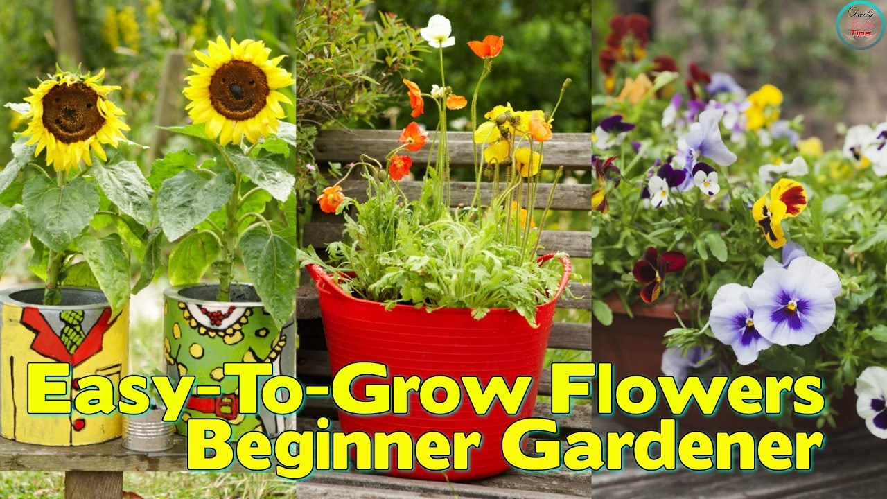 Easy To Grow Flowers For The Beginner Gardener