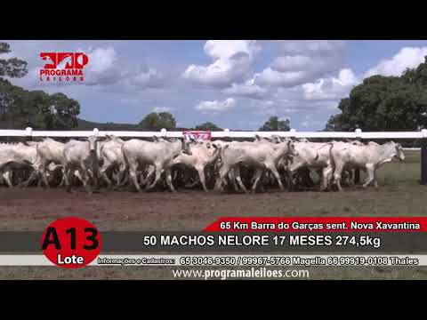 LOTE A13