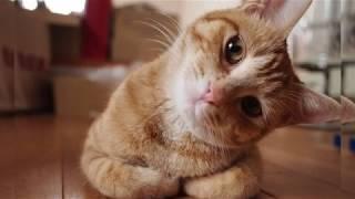 Sevimli Hayvanlar Hakkında Hiç Bilmediğiniz İlginç Bilgiler ( komik videolar )