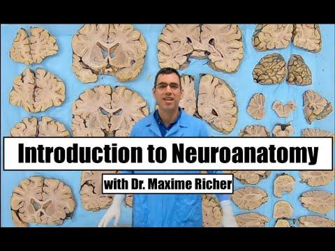 Episode 16: Basic Neuroanatomy pt.2