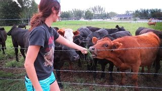 GIRL TRICKS SCARED COWS