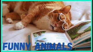 Я РЖАЛ ПОЛ ЧАСА СМЕШНЫЕ ЖИВОТНЫЕ ПРИКОЛЫ С КОТАМИ И СОБАКАМИ ЛУЧШИЕ ПРИКОЛЫ Funny Pets 11