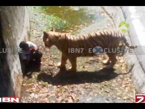 Delhi Ke Zoo Main Tiger Ke Hamale Se Chhatra Ki  Maut