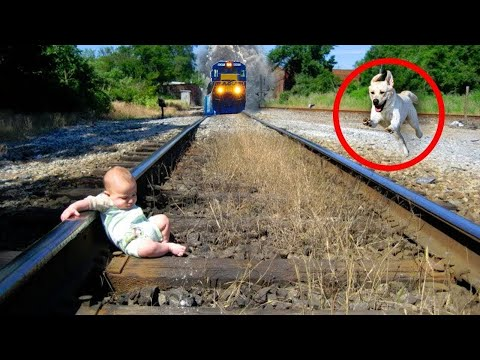 10 Amazing Pets Who Saved Their Owners