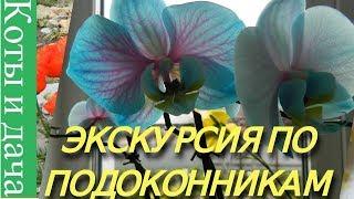 ЭКСКУРСИЯ ПО ПОДОКОННИКУ** Мои комнатные цветы и растения** ЦВЕТЫ НА ПОДОКОННИКЕ1** СЕНСАЦИЯ**