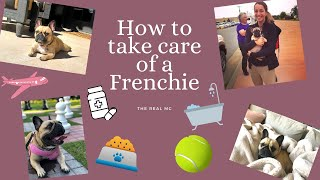 HOW TO TAKE CARE OF A FRENCH BULLDOG | What you should know before buying one!