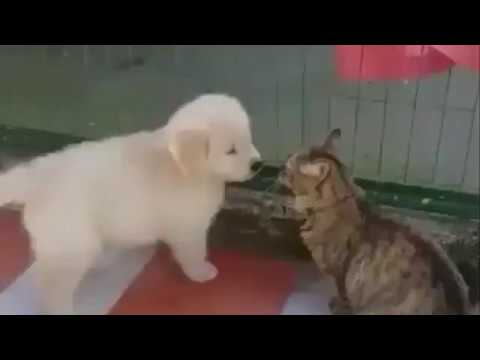Cats And Dogs Funny Compilation