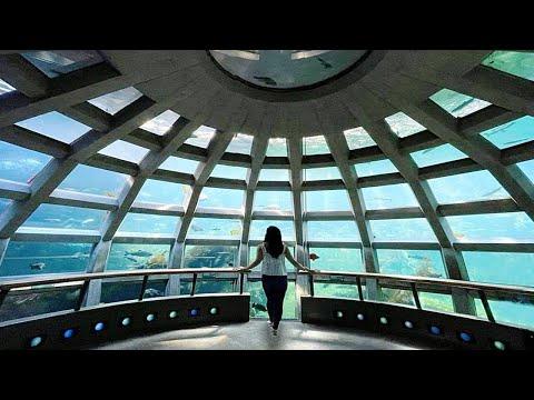 The most UNDERRATED public aquarium?! 😮- (Seattle)