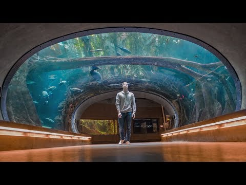 The Seattle Aquarium! 😮- (a Hidden Gem)