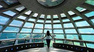 The Seattle Aquarium! 😮- (a Hidden Gem)