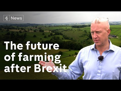 How Brexit could redefine UK farming and protect its damaged ecology