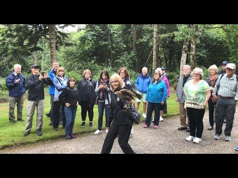 Feeding the Hawks at Ireland's School of Falconry