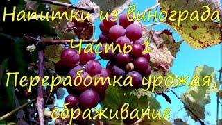 Напитки из винограда. Переработка урожая, сбраживание.