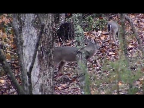 2019 NC Deer - RUTTING Bucks