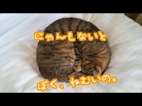ニャンモナイトなる猫のかわいい画像に癒されまくり!!