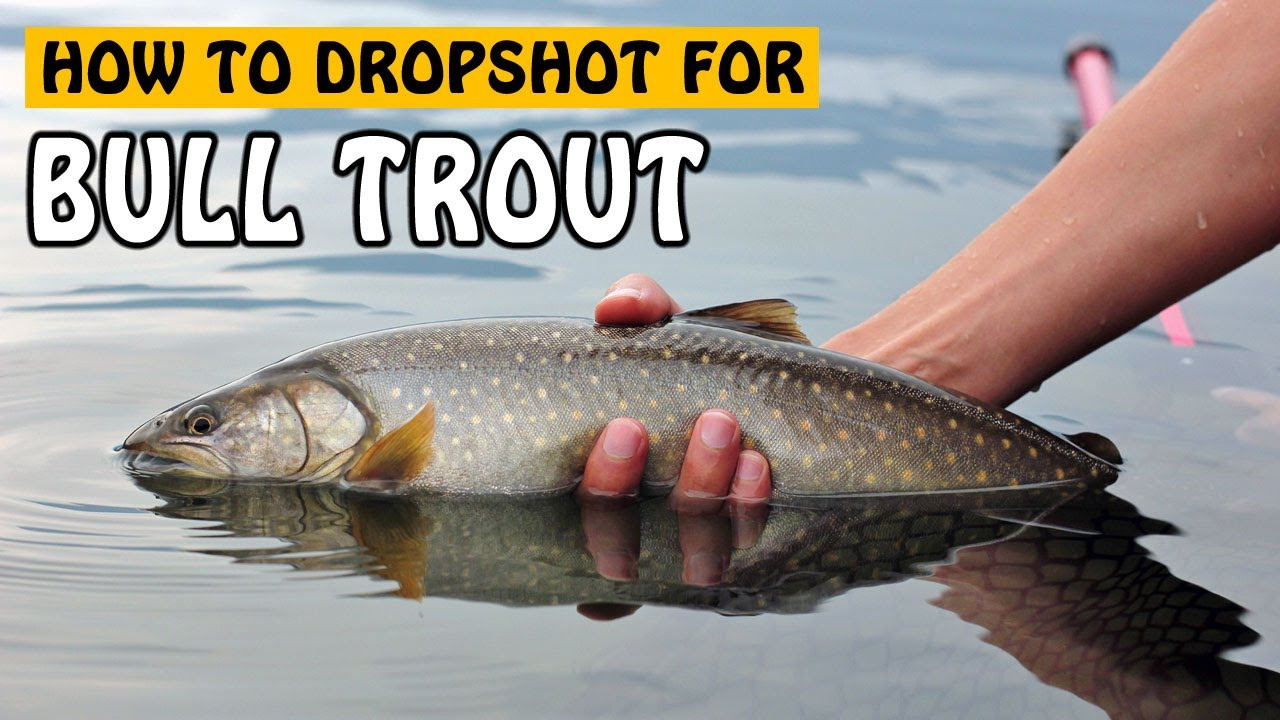 Fishing how to fish drop shotting for trout for How to fish trout