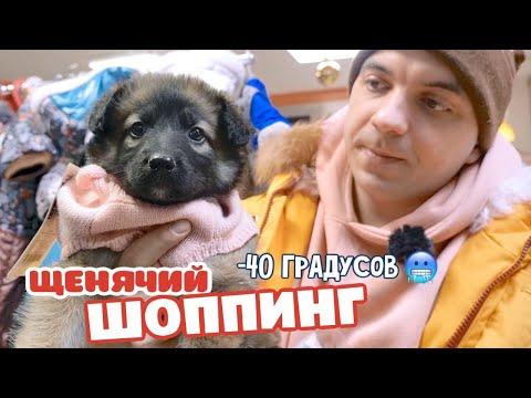 Щенячий ШОППИНГ! Дикие морозы Сибири.
