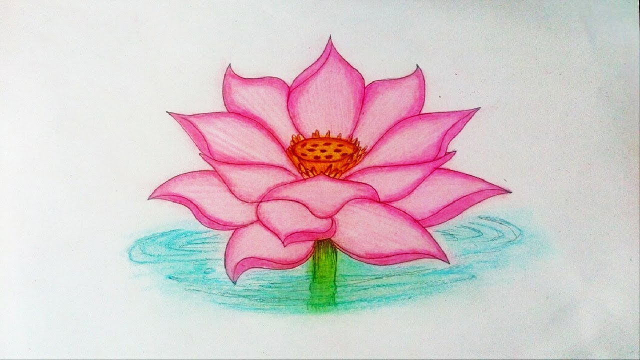 How To Draw A Lotus Flower Step By