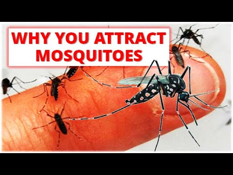 ARE YOU A MOSQUITO MAGNET?| Why do you attract mosquitoes?