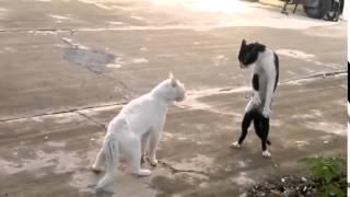 Коты на разборках  Кот гопник