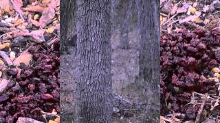 Deer Bait'n #2 Raisin Mix/ Gel Blocks