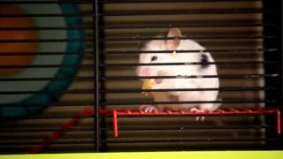 Myszka tutek mówi ludzkim głosem w wigilię