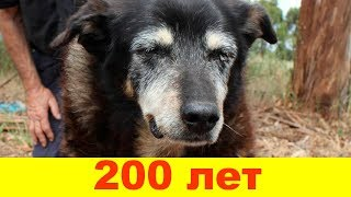 10 самых старых собак в мире