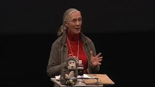 Conférence Jane Goodall Ted Talk