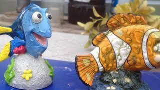 Искусственные декорации в аквариуме через полгода