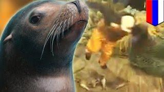 Тюлень, угодивший в сеть, покусал рыбака и его собаку(Вот что случается, если закинешь невод, а вместо золотой рыбки тебе попадётся злющий тюлень. Рыбаки попытал..., 2014-10-16T16:23:15.000Z)