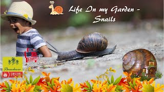 Animal Science for Kids | Snails For Kids