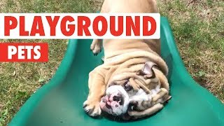 Playground Pets | Funny Pet Video Compilation 2018