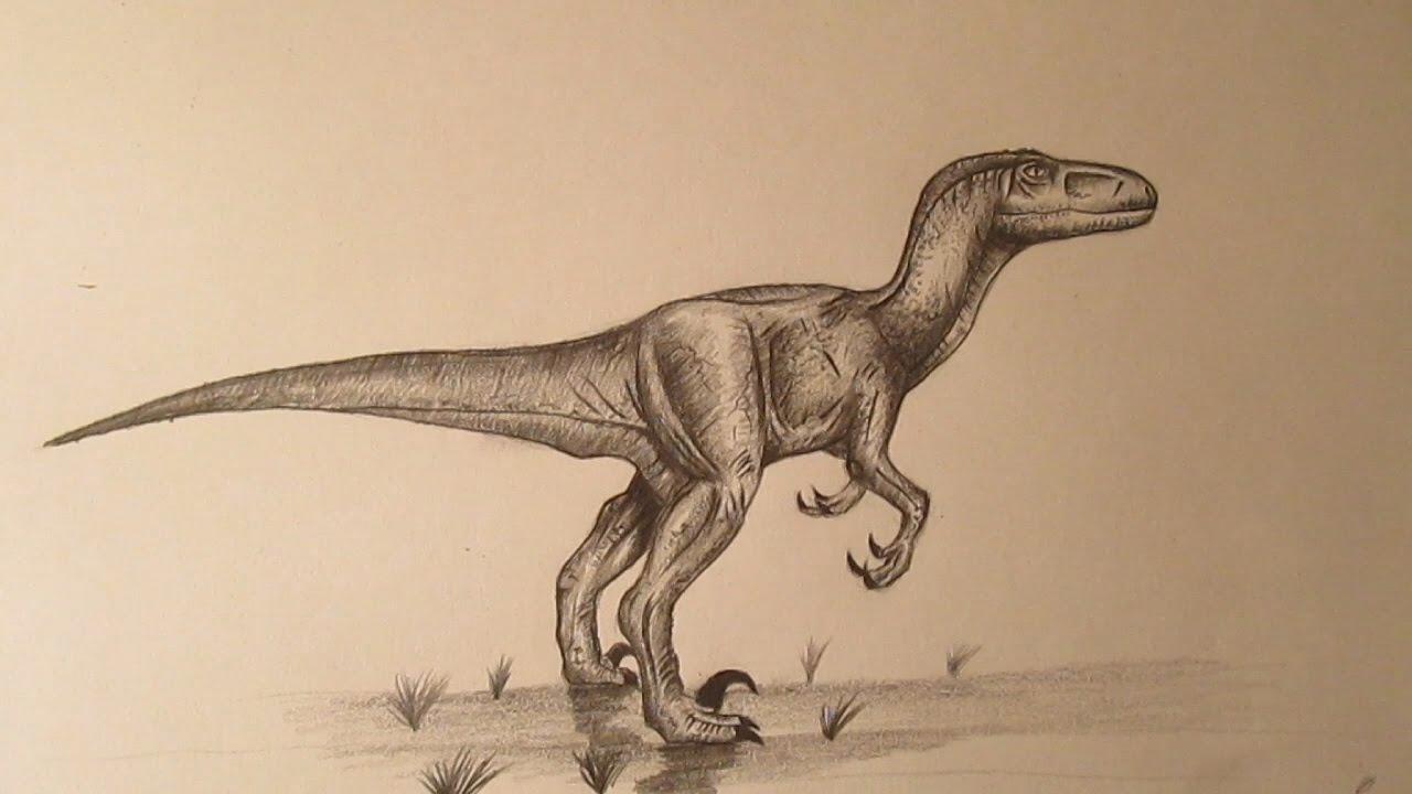 Cómo dibujar un velociraptor a lápiz, dibujando dinosaurios how to ...