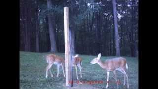 Home Made Deer Feeder