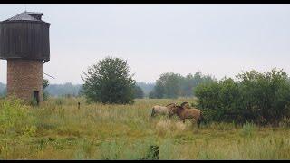 Czarnobyl - 1000 mil w Zonie: Dzień 1 - Epizod I
