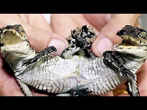15-weirdest-creature-oddities