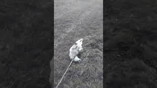 Собака с выбором (посмотри до конца поднимет настроение!)