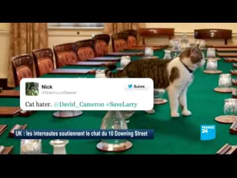 downing chat Larry the cat doesn't give japanese visitors the warm welcome they were expecting at downing larry the cat shuns japanese visitors at downing offer live chat.