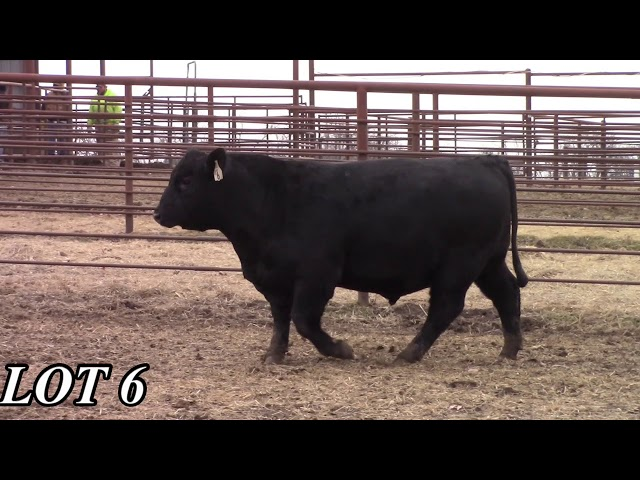 Mead Angus Farms Lot 6