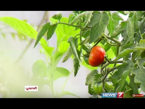 More tips for Urban Kitchen Gardening  Poovali  News7 Tamil