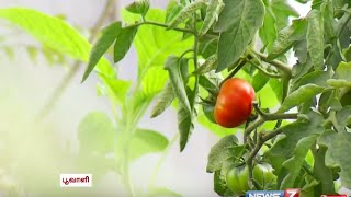 More tips for Urban Kitchen Gardening | Poovali | News7 Tamil